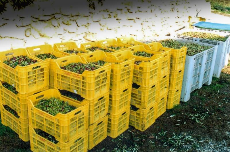 BildGeschichte 12/17 - Olivenernte